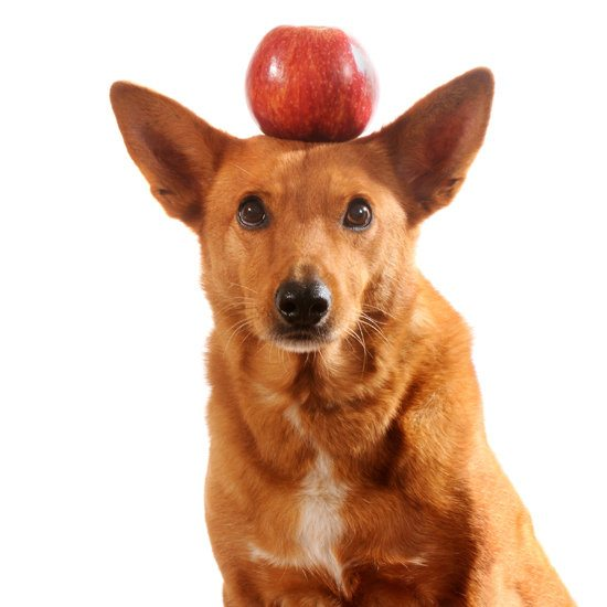 can dogs eat apple