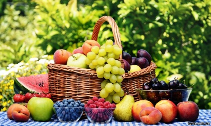 can dogs eat fruits and berries?