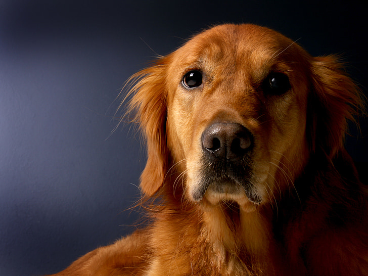 can dogs have different blood types