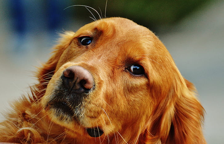 do dogs cry